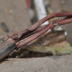 inspection-electrical-sydney-cotton cable