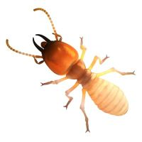 This image has an empty alt attribute; its file name is termites-in-Campbelltown-NSW-2.jpg