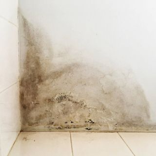 This image has an empty alt attribute; its file name is water-damage-in-Cronulla-NSW.jpg